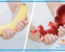 19 неделя беременности: размер и развитие плода