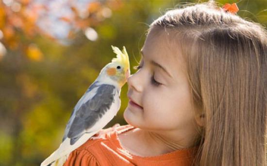 Чем опасны для детей попугаи?